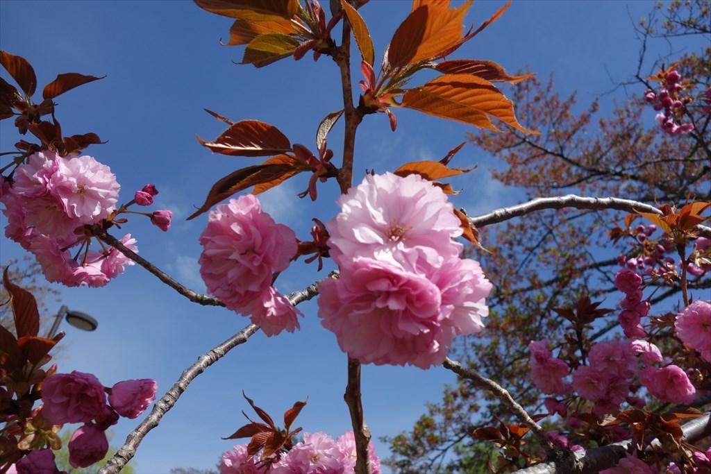http://yanaso.lolipop.jp/NOTE_E12/blog/2019/04/30/DSC06281.jpg