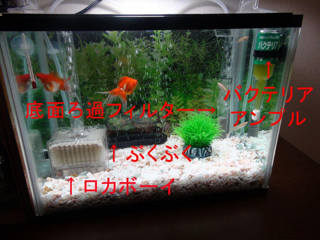 http://yanaso.lolipop.jp/aqua/2012/01/04/DSC02112.jpg