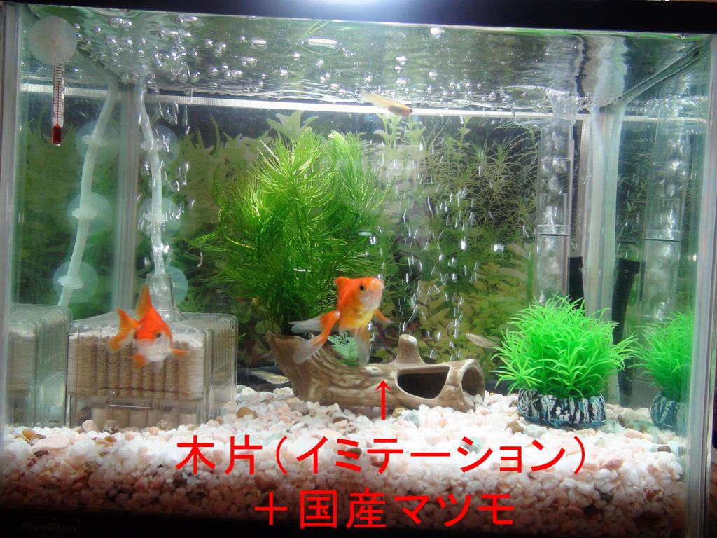 http://yanaso.lolipop.jp/aqua/2012/01/04/DSC02113.jpg