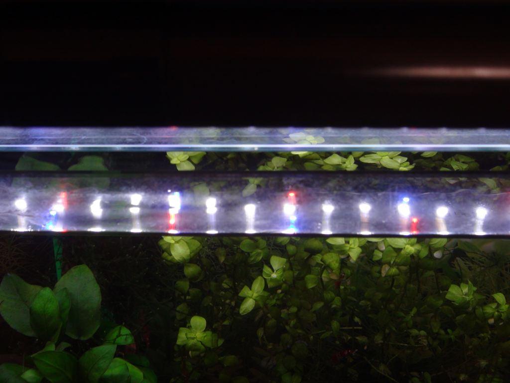 http://yanaso.lolipop.jp/aqua/2012/09/17/DSC03201.jpg
