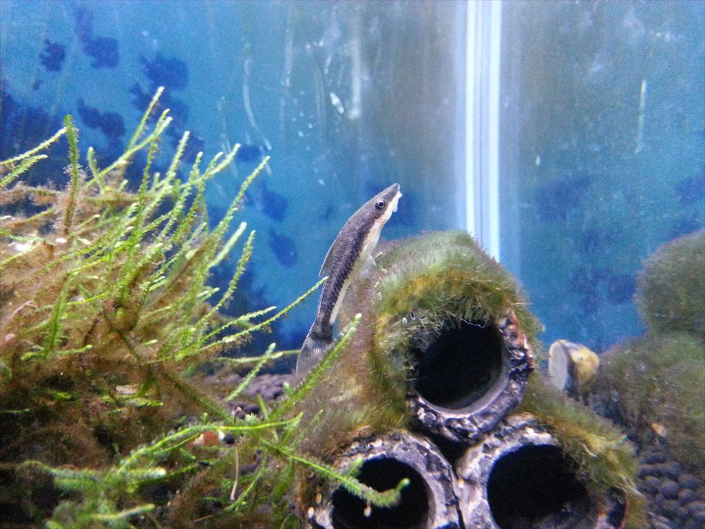 http://yanaso.lolipop.jp/aqua/2012/12/23/20121223_112242.jpg