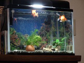[IMG]金魚移動